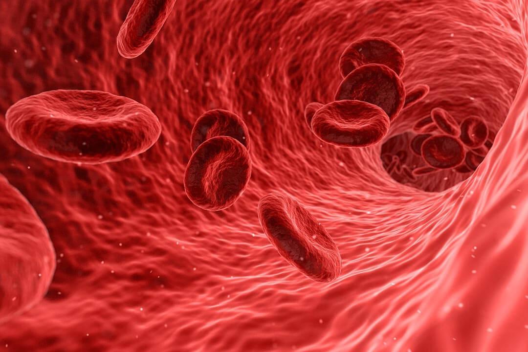Blutanalyse - Naturheilpraxis Borger